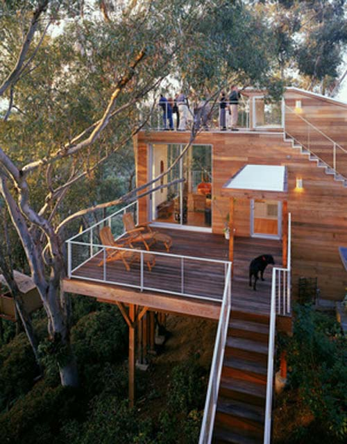 Tree house design luxury wooden house design by safdie for Modern tree house designs