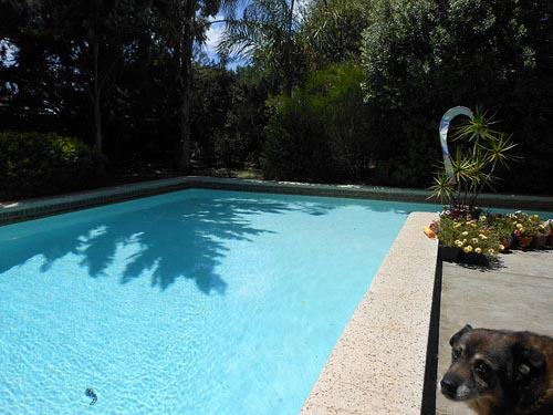 5 Big Questions To Think About Before You Buy A Swimming Pool
